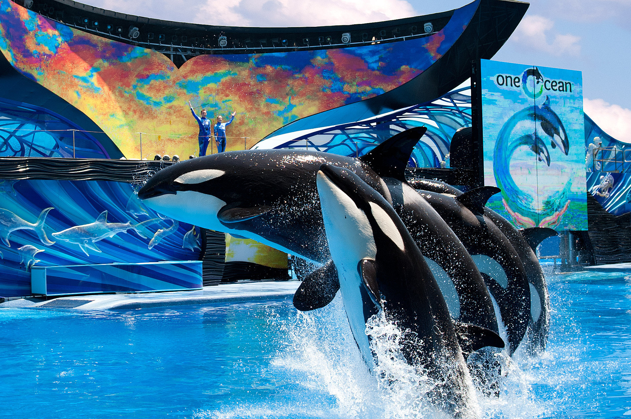 Whales at Sea World | Club Orlando | Westgate Resorts