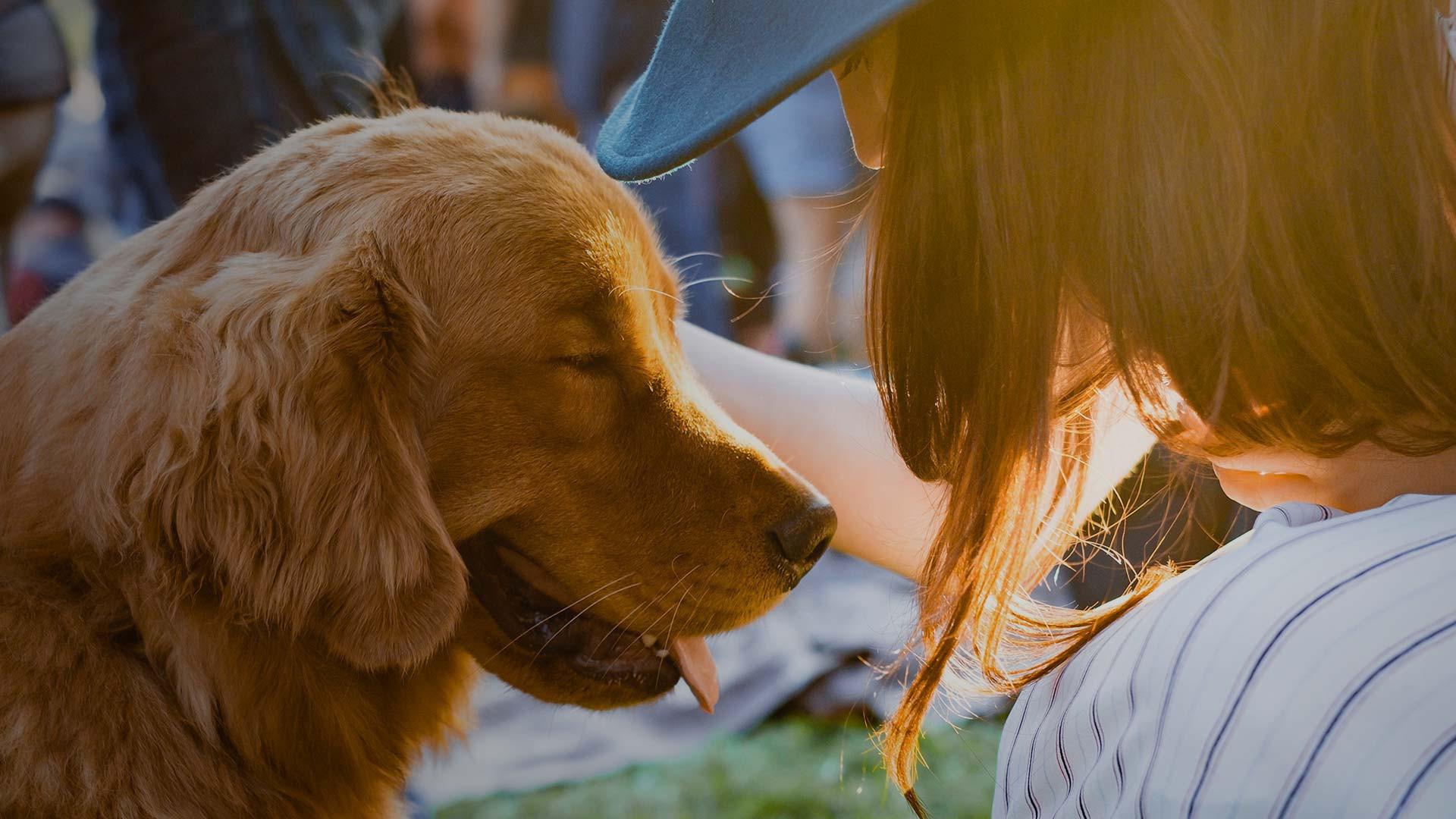 Pet Friendly Hotels in Orlando, FL | Orlando Resorts | Westgate Resorts