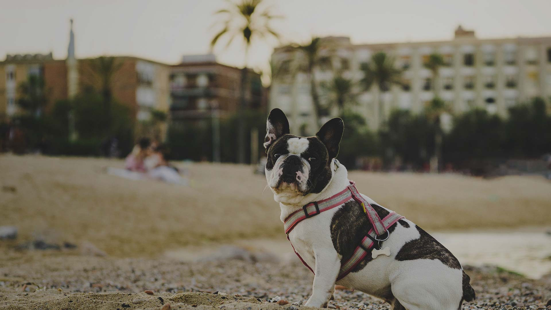 Pet Friendly Hotels in Myrtle Beach, SC | Myrtle Beach Hotels | Westgate Resorts