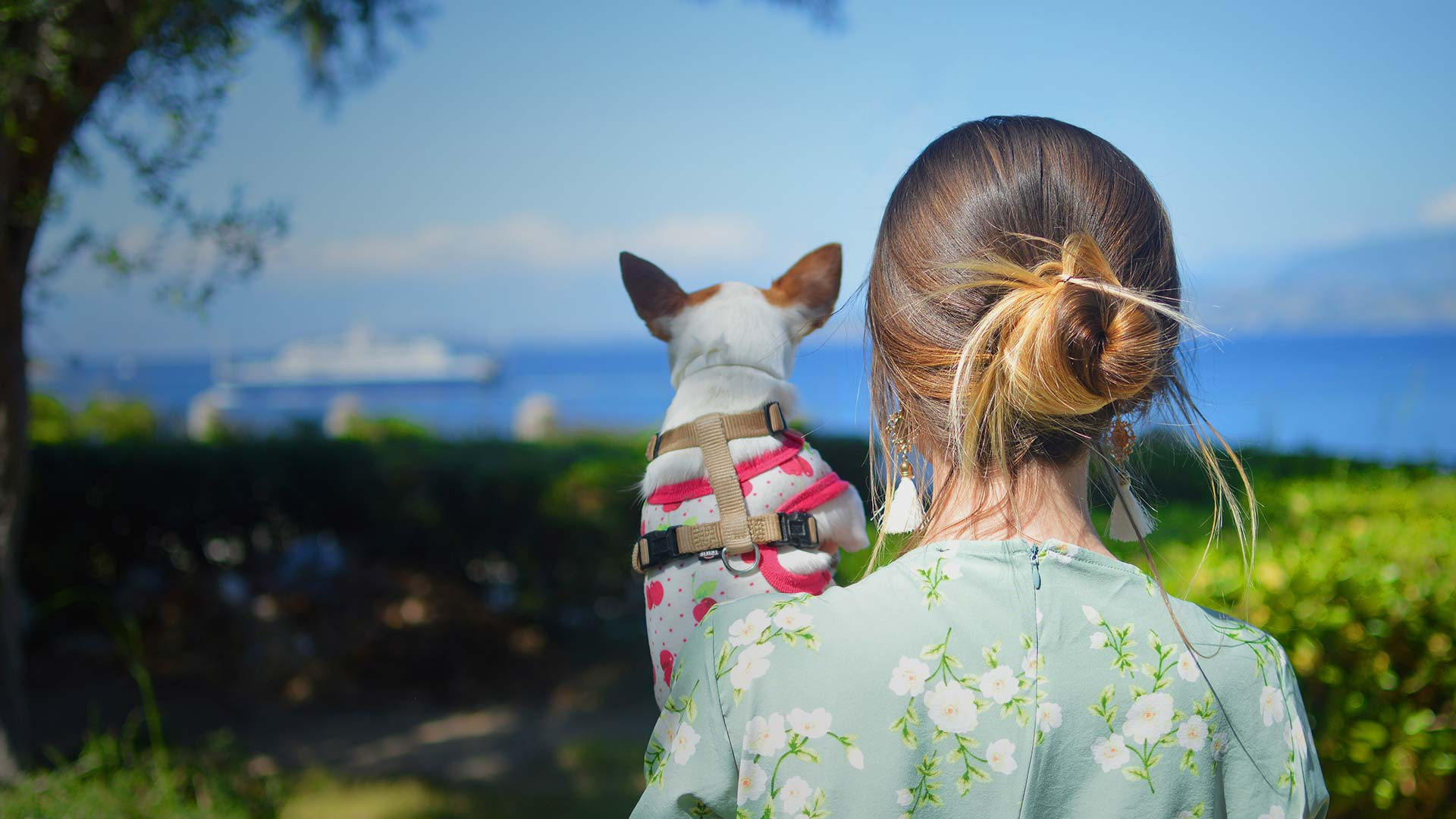 Pet Friendly Disney Hotels | Disney Area Hotels & Resorts | Westgate Resorts