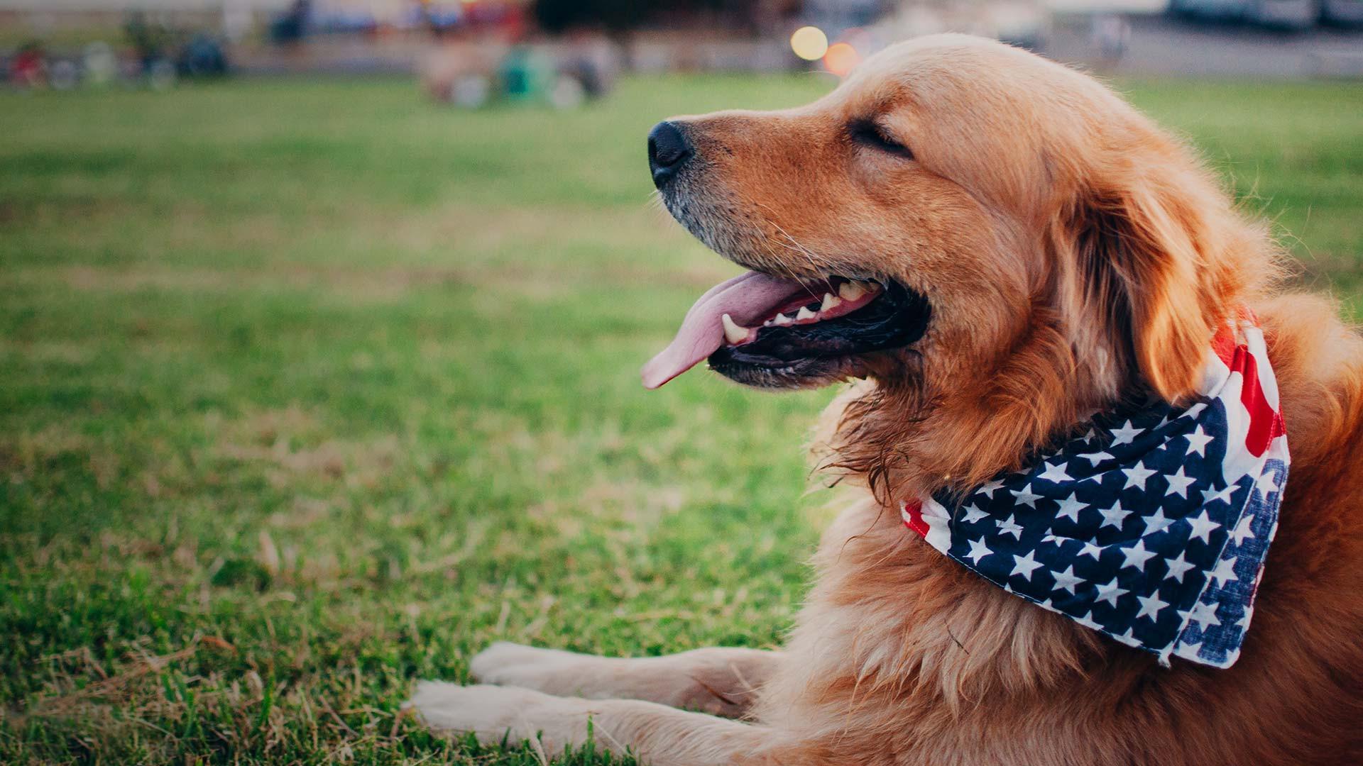 Pet Friendly Resorts in Williamsburg, VA | Williamsburg Hotels | Westgate Resorts