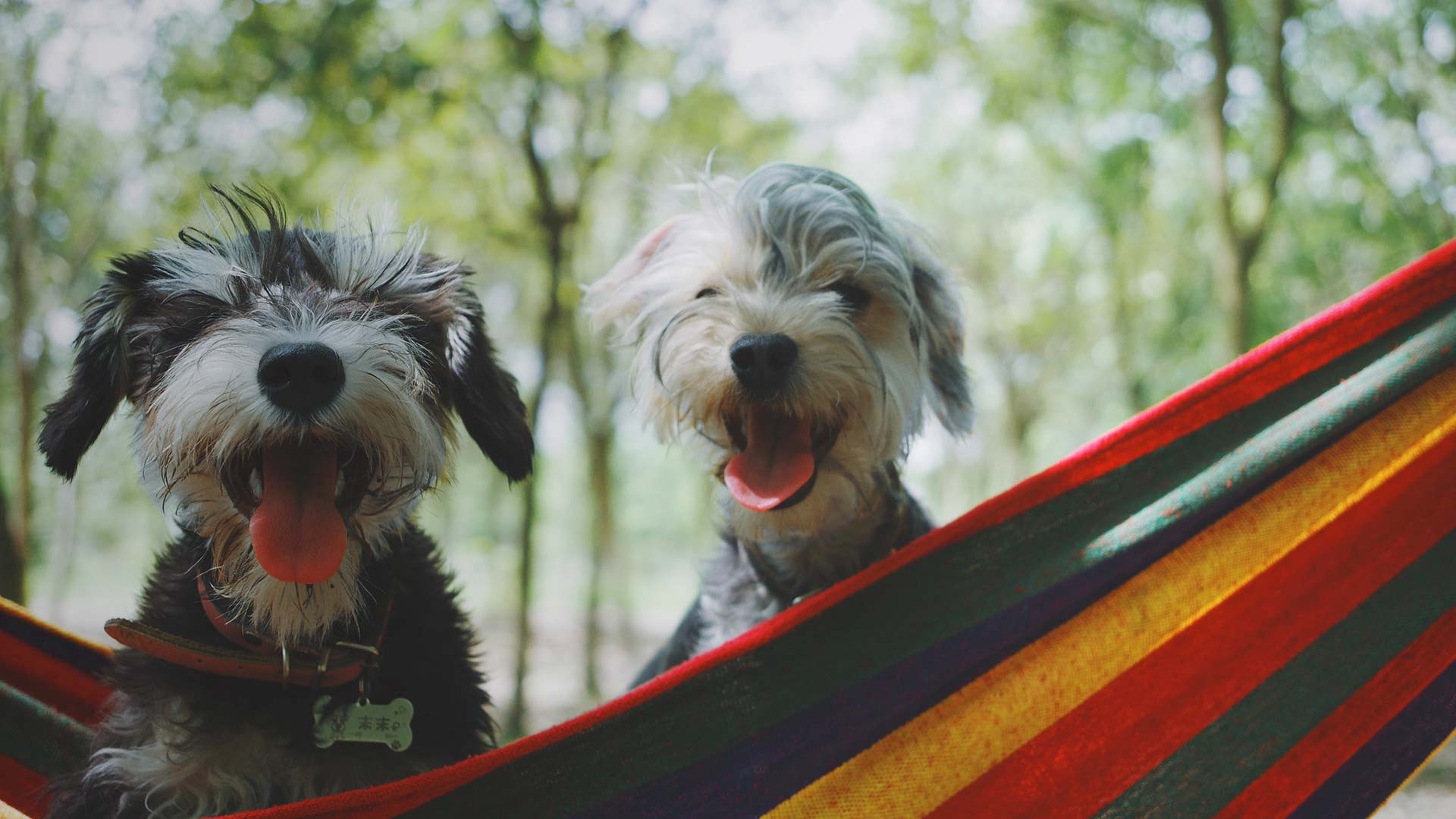 Dogs Hanging Out at our Pet Friendly Cabins in Florida | Florida Cabins | Westgate Resorts