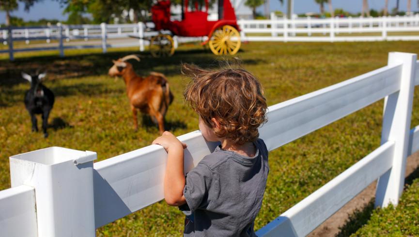 Petting Farm Near Orlando, FL |  Westgate River Ranch Resort & Rodeo | Westgate Resorts
