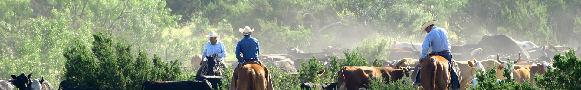 Florida group travel couldn't be easier than at Westgate River Ranch Resort & Rodeo, which boasts a wide variety of flexible meeting and banquet space, making it the ideal locale for your group.
