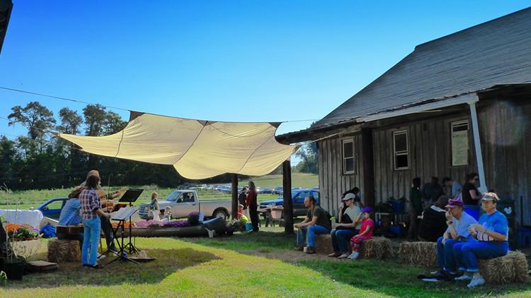Farm Tour | 8 Florida Agritainment Activities You've Never Heard Of! | Agritourism Ideas & FL Destinations
