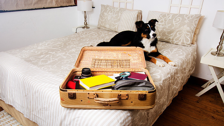 Dog Friendly Travel Tips | Pack Essentials | 10 Tips When Traveling Alone With Your Dog This Summer!