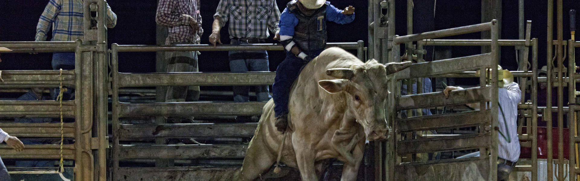 Be mesmerized by the unpredictable danger of the Saturday Night Rodeo at Westgate River Ranch Resort & Rodeo in Florida. This weekly rodeo draws rodeo athletes from all over to compete in trick riding, barrel racing and bull riding.