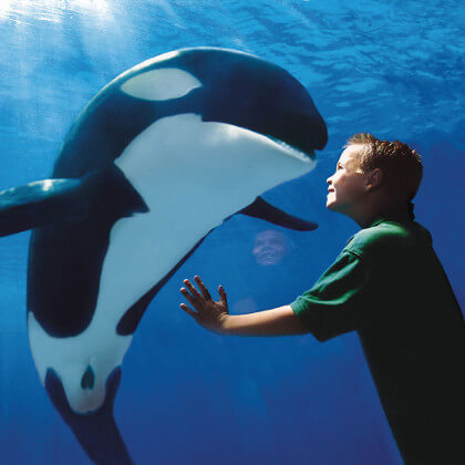 SeaWorld: Choose Your Own Adventure Tickets