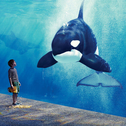 SeaWorld: Single Day Tickets Tickets